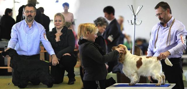 Posudzovanie CACIB Nitra Dog