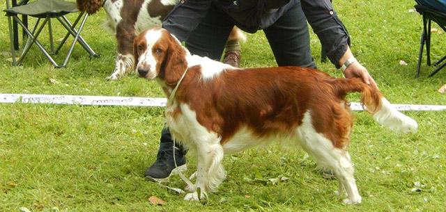 Klubová výstava chovateľov poľovných sliedičov 2014