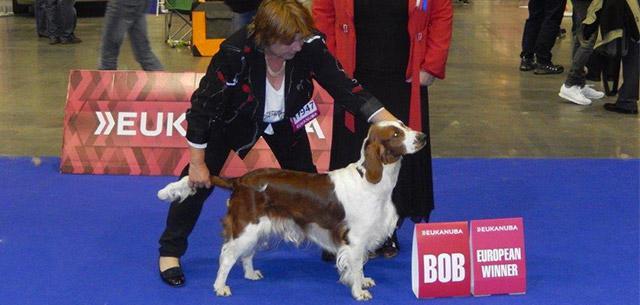 Euro dog show Brno 2014