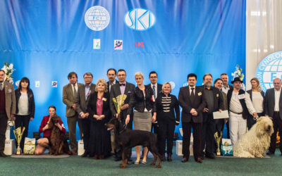 NV Bratislava 2017