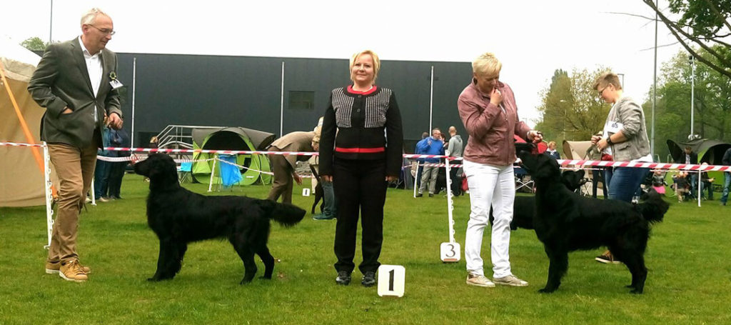 7.5.2017 – Belgian retriever club – Turnhout
