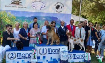 Posudzovanie Marche Winner Taliansko