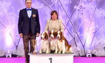 Winner Show Nitra 2018