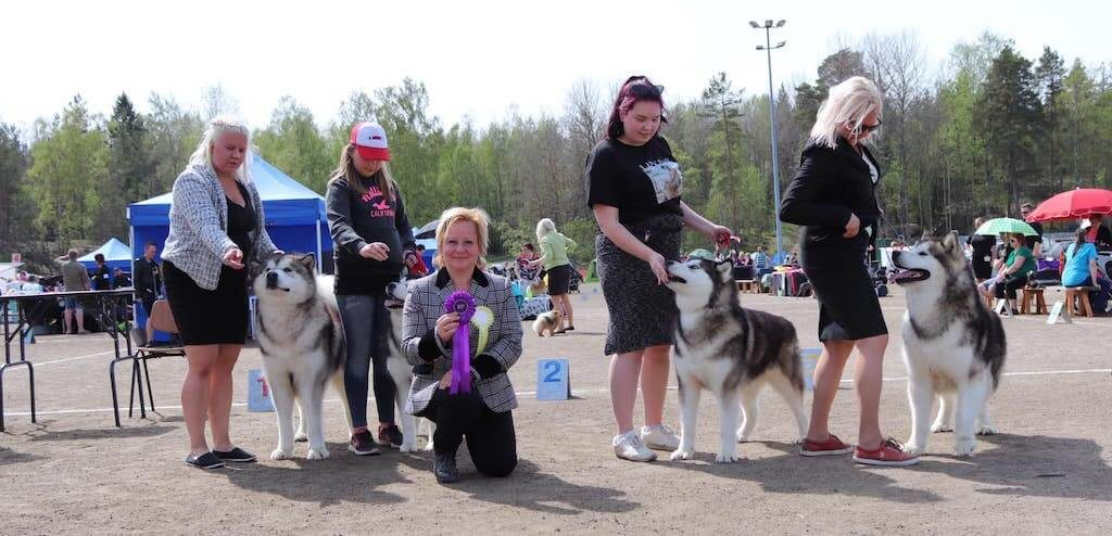 Rauma, Findland All Breed show 19.5.2019 (over 1500 dogs entered)!