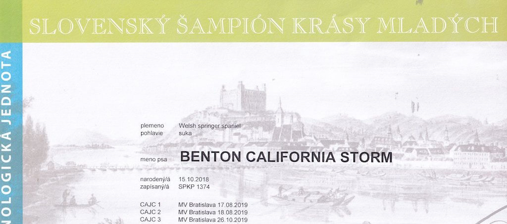 """BENTON California Strom """"Carolinka"""" SLOVENSKÝ ŠAMPIÓN KRÁSY MLADÝCH"""