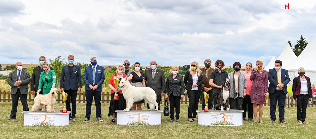 judging VII. – VIII. FCI International Dog Show Summer Cup Nitra 17.-19.07.2020